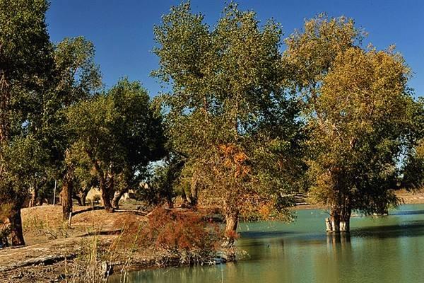 Diversifolious poplars Park